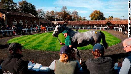 A horse is walked through the parade ring at the Tattersalls Bloodstock Auction in Newmarket.