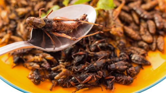 Grasshoppers are commonly eaten as a side dish, snack and lunch-box ingredient in Korea. In Mexico, they are known as chapulines, and are a popular form of street food. Preparation is simple: salt them lightly, put in a bit of water, and simmer until dry. Bigger grasshoppers are deep fried or roasted.