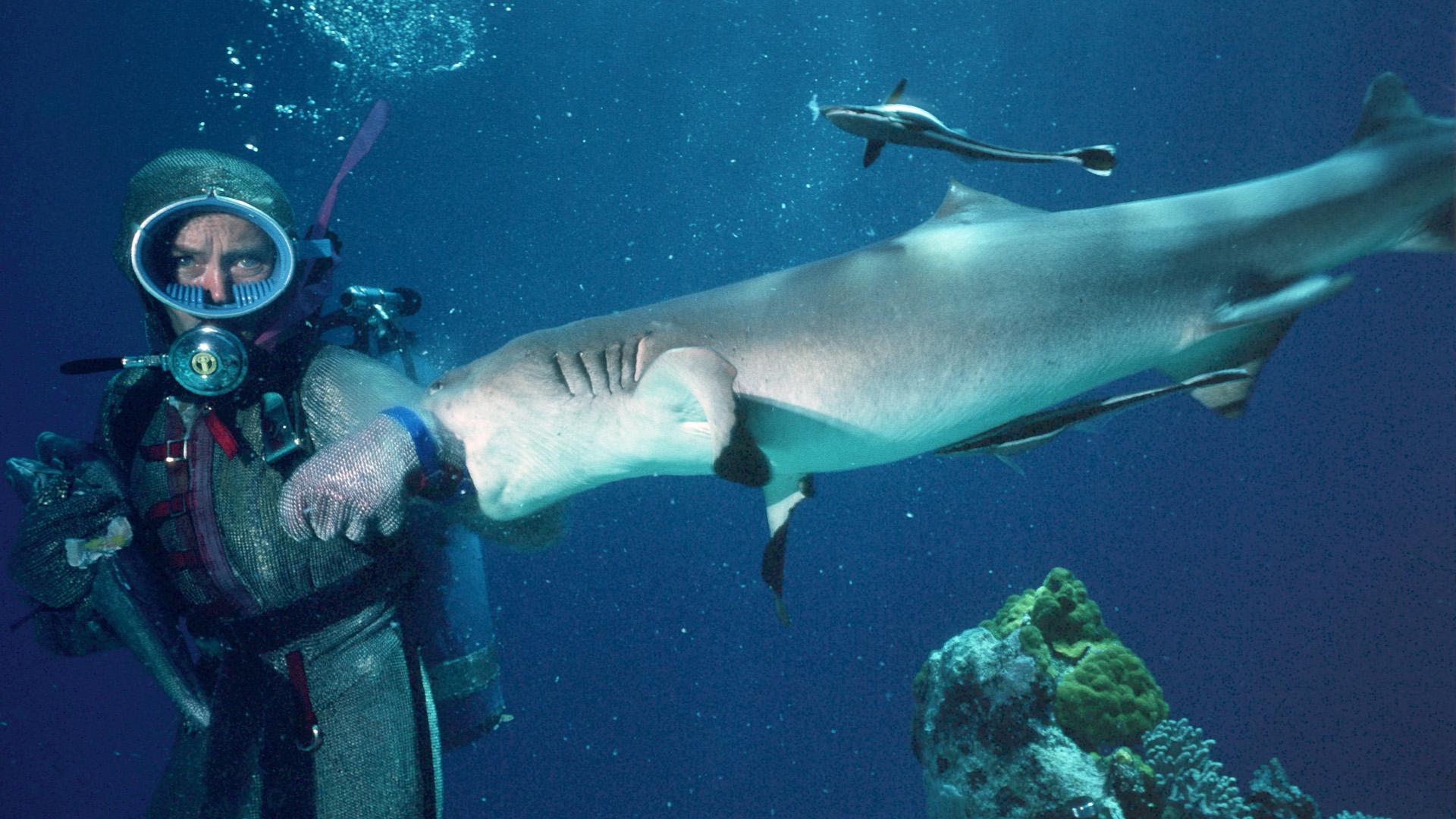 Valerie Taylor being bitten by a shark