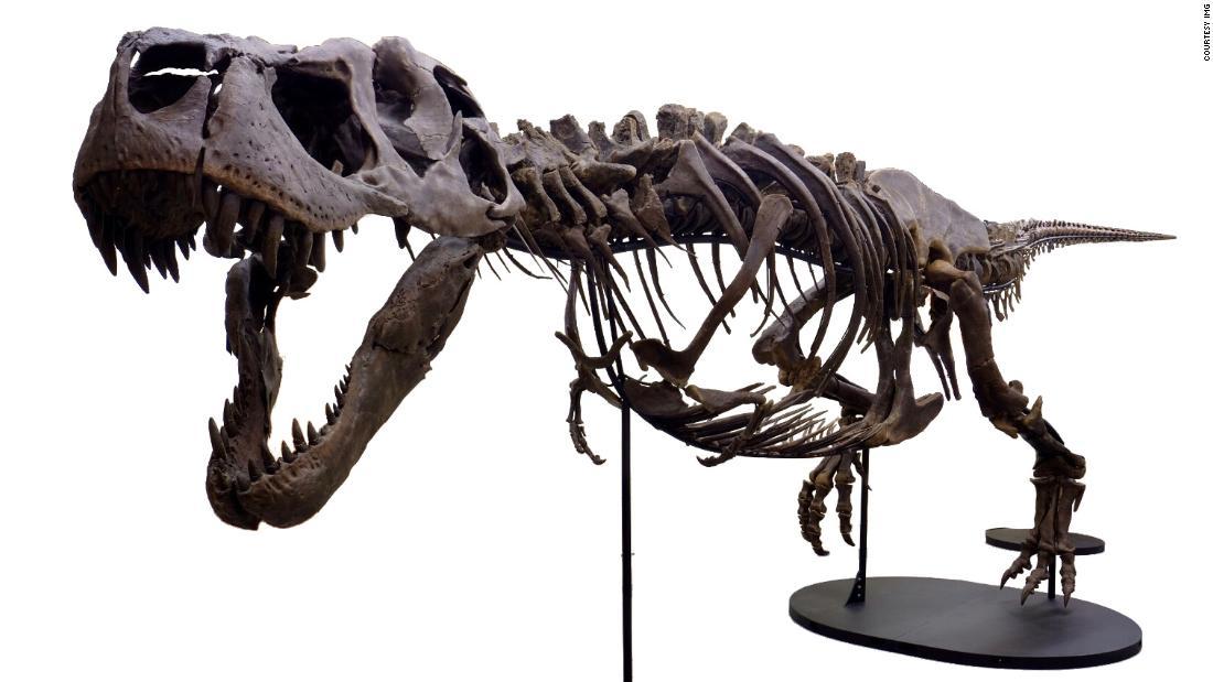 190912142342-01-victoria-the-t-rex-super-tease.jpg