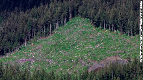 Clear-cutting in the years before development was banned left slopes along the Inside Passage bare.