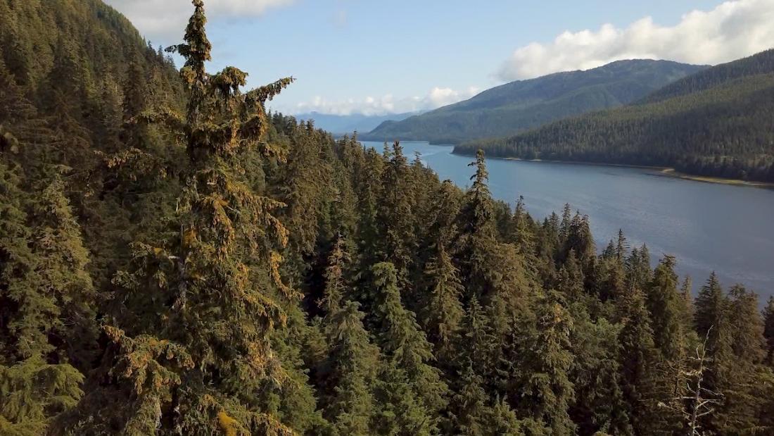 America's largest forest under threat