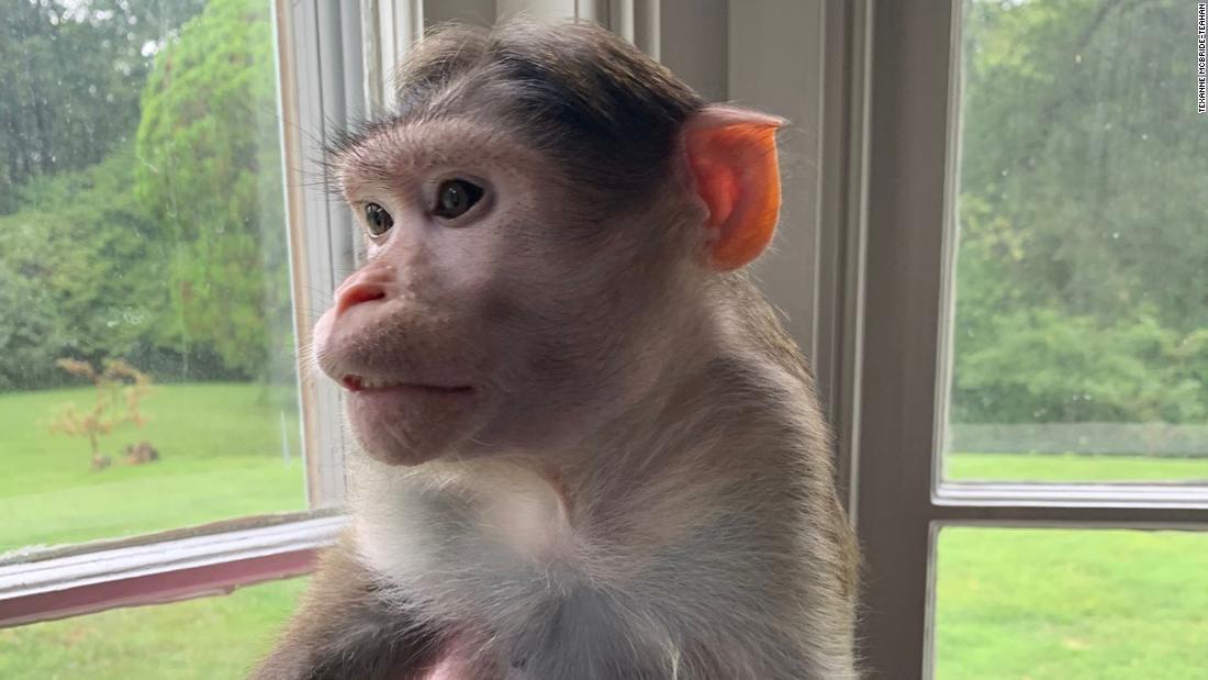 Sie ist in einem Rechtsstreit um drei emotionale Unterstützung Affen