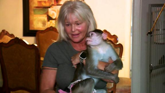 Image for Missouri woman in legal battle to keep three emotional support monkeys