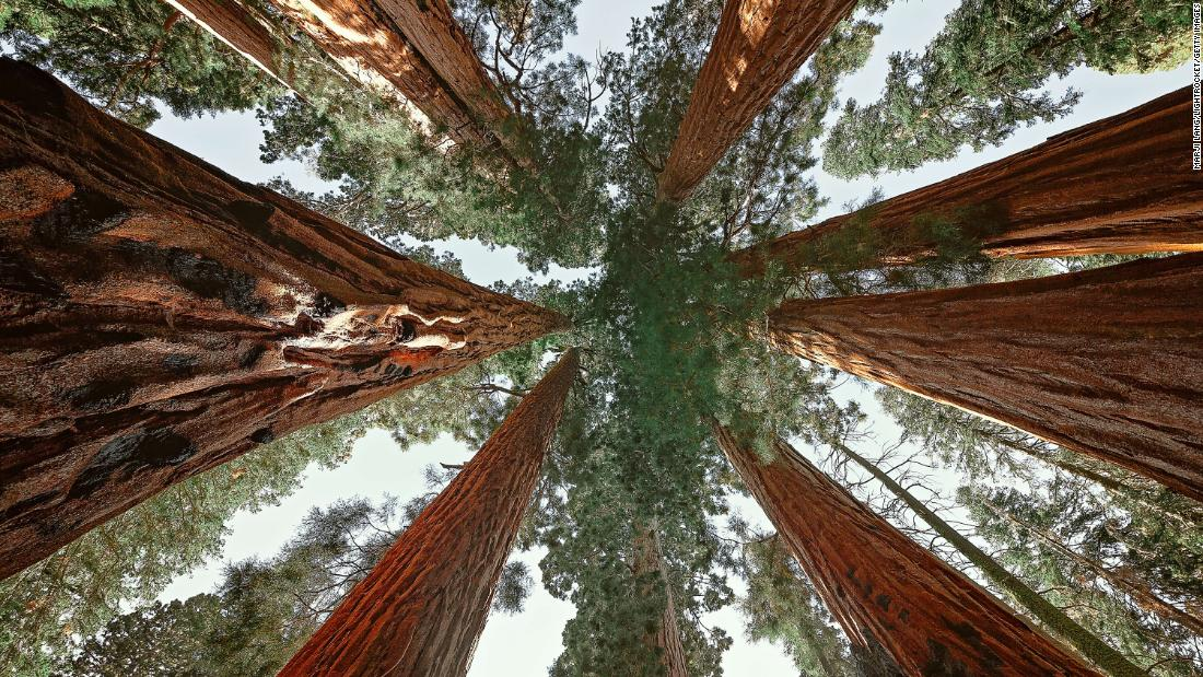 A California conservation group wants to buy world's largest remaining private giant sequoia forest for $15 million