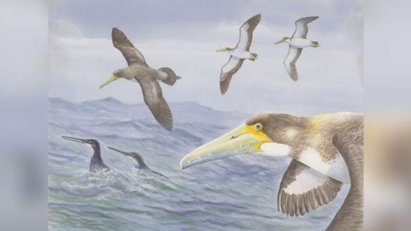 Researchers found a fossil of one of the oldest bird species in New Zealand. While its descendants were giant seafaring birds, this smaller ancestor likely flew over shorter ranges.