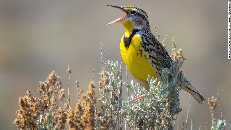 Bird Population In Us And Canada Has Dropped By 29 Since 1970 Study Says Cnn