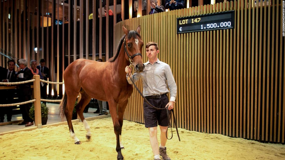 The most expensive horse ever sold