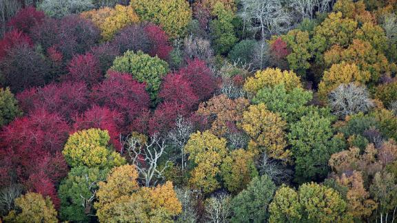 Leaves on trees can be seen changing color in Gloucestershire, England.