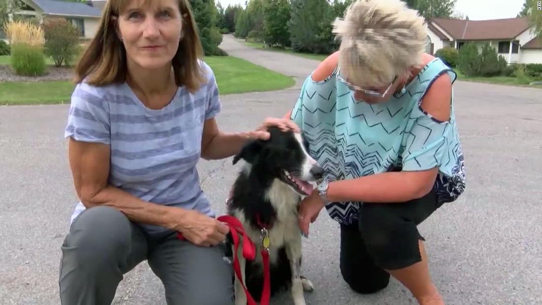 Die Frau kündigte Ihren job, Familie, Hund im Urlaub verloren