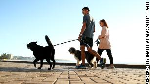 Dog owners walk their pets (file photo).
