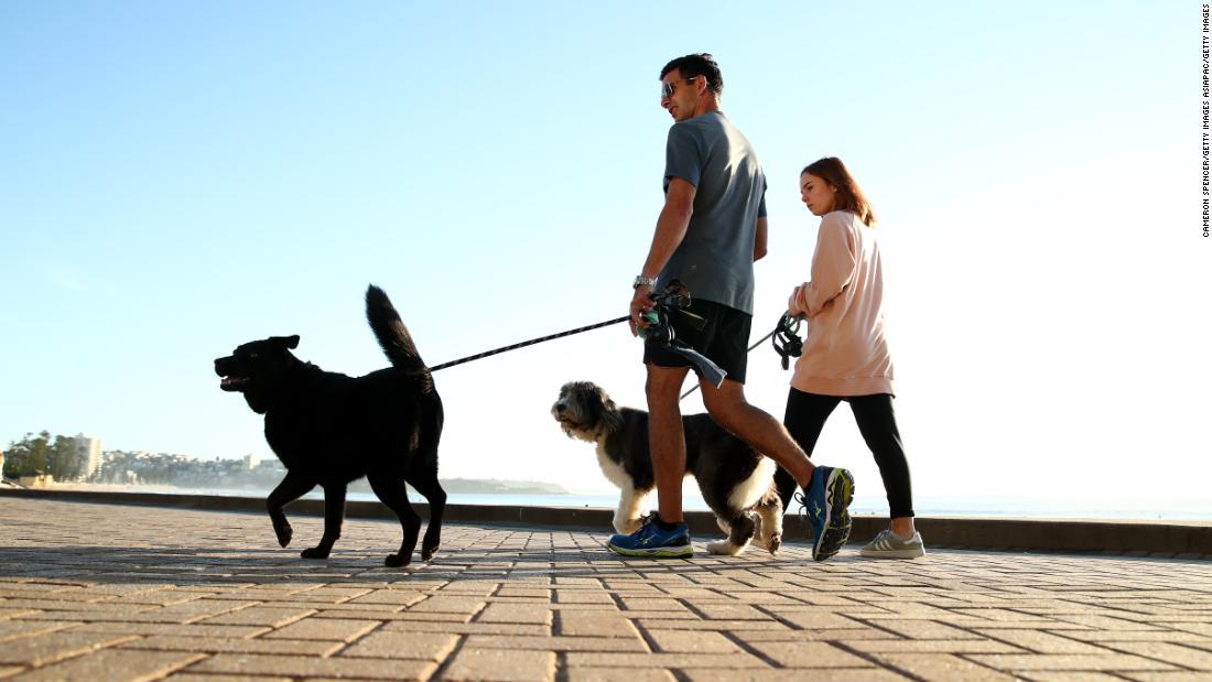 ペットの飼い主の方が徒歩犬の日常顔$2,700微このオリ