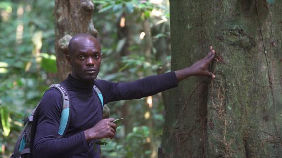 Cynel Moundounga, in the field taking tree samples.