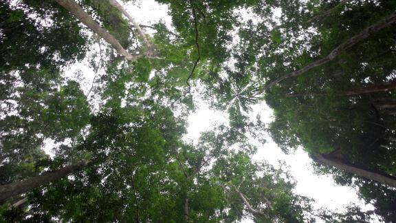 Forest around Lastoursville, Gabon.