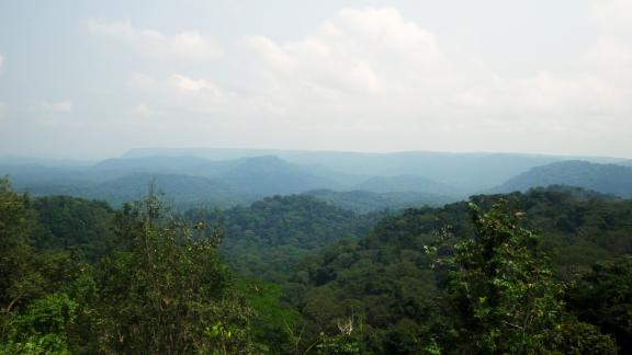 Forests cover about 85% of Gabon.