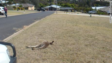 Remains of the kangaroos were found on residents' front lawns on Sunday in Tura Beach, on the New South Wales South Coast