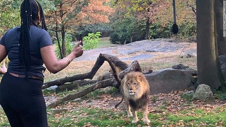 Video shows woman taunt lion and dance inside enclosure