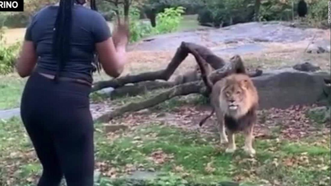 Video shows woman taunt lion inside zoo enclosure