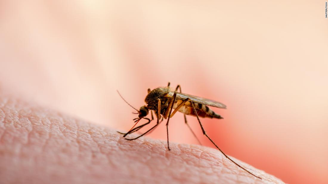 Warum Mücken wählen Sie