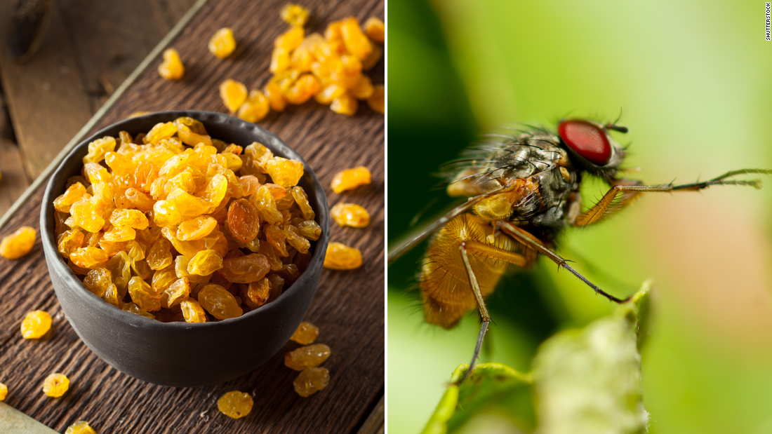 Those golden raisins you feed your toddler are allowed to contain 35 fruit fly eggs as well as 10 or more whole (or equivalent) insects for every 8 ounces. Kid-sized containers of raisins are an ounce each. That's more than four eggs and a whole insect per box.