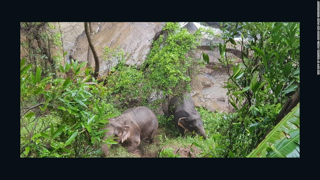 5 elephants and a calf die while trying to save the young one in a Thai waterfall