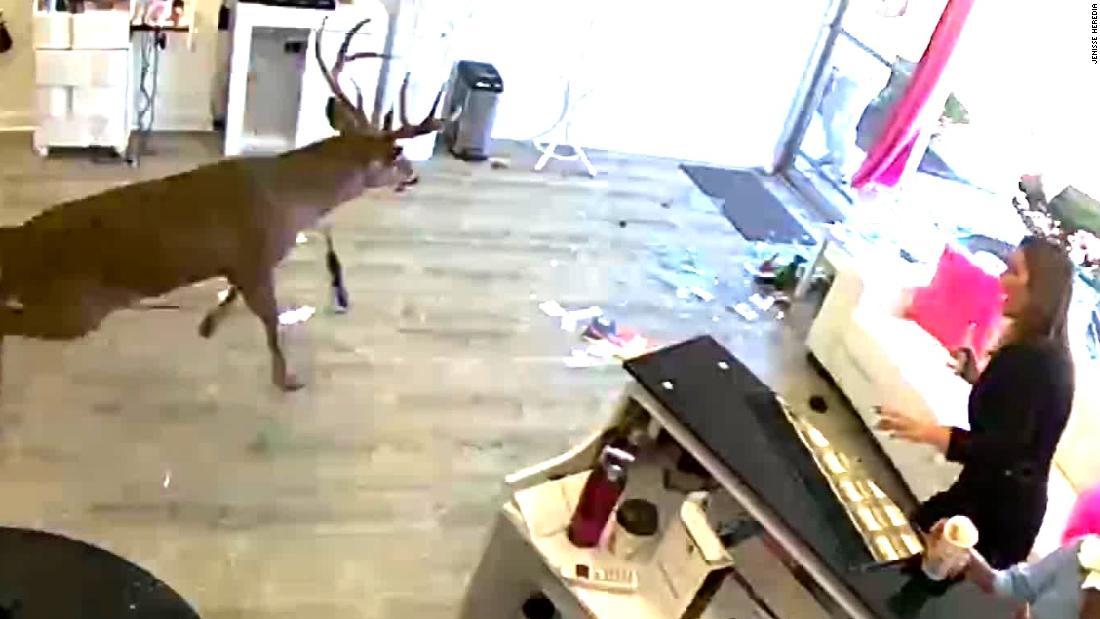 サロンのお客様にフリークとして鹿バスト窓