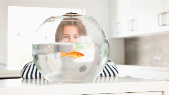 The act of caring for another creature is part of the health benefit of pet ownership. A 2015 study asked teenagers with Type 1 diabetes to feed and check water levels of fish twice a day. By the end of three months, the teens were better at managing their diabetes.