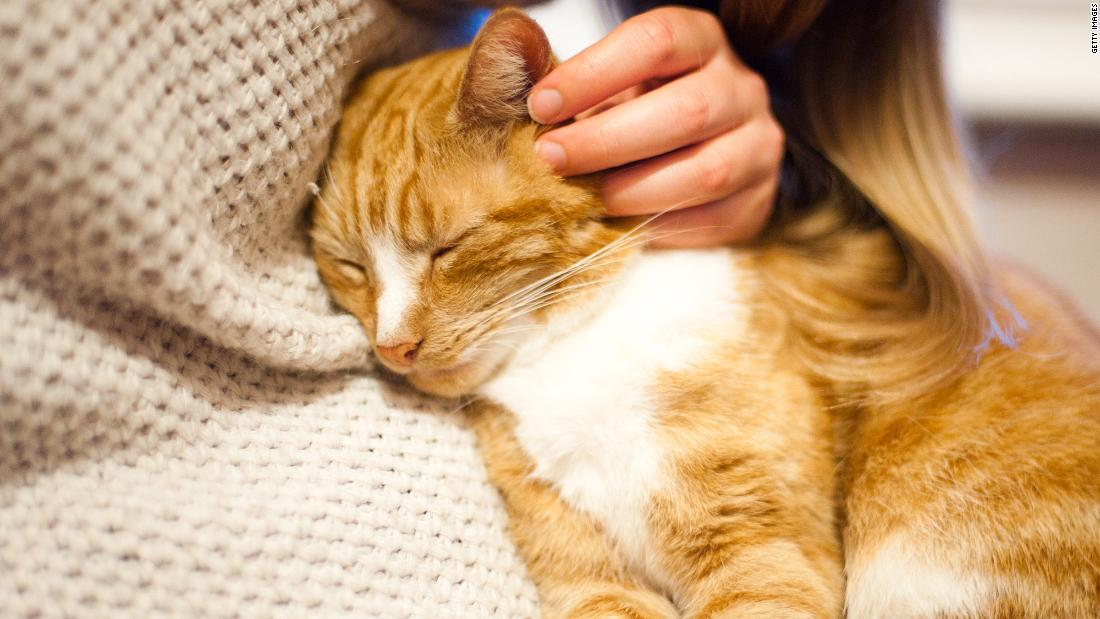 "The act of petting your cat releases the bonding hormone oxytocin, also called the ""cuddle chemical."" The fact that your cat is purring while you're doing this is an additional stress reducer."