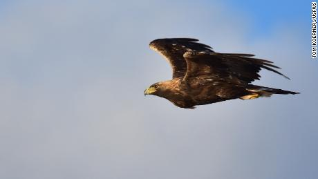 Golden eagles are among the 389 types of bird that may not be able to survive in North America, the report says.