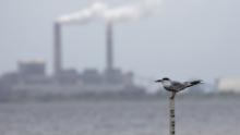 A tern sits across Hillsborough Bay from a coal-fired power station near Tampa, Florida.