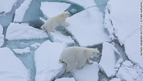 & # 39; It was devastating & # 39 ;: Writing the rapid loss of Arctic sea ice