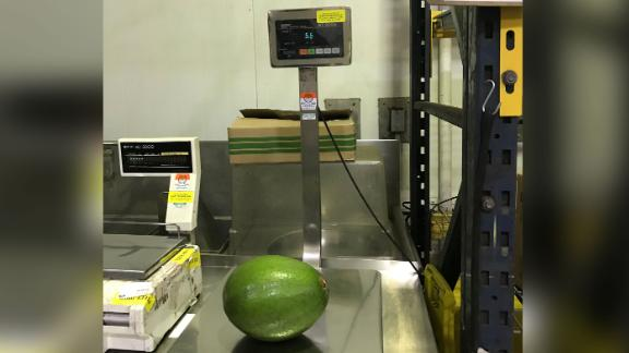 The family had to find a certified scale to weigh the avocado for the Guinness record book.