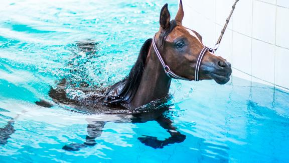 An indoor pool is used to exercise the horses some doing as much as 10 laps of an Olympic-sized swimming pool at a time.