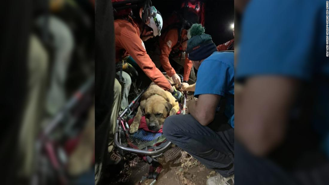 A massive mastiff had to be rescued after getting exhausted on a mountain hike