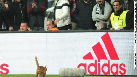 A cat enters the field of play during a UEFA Champions League tie between Besiktas and Bayern Munich.