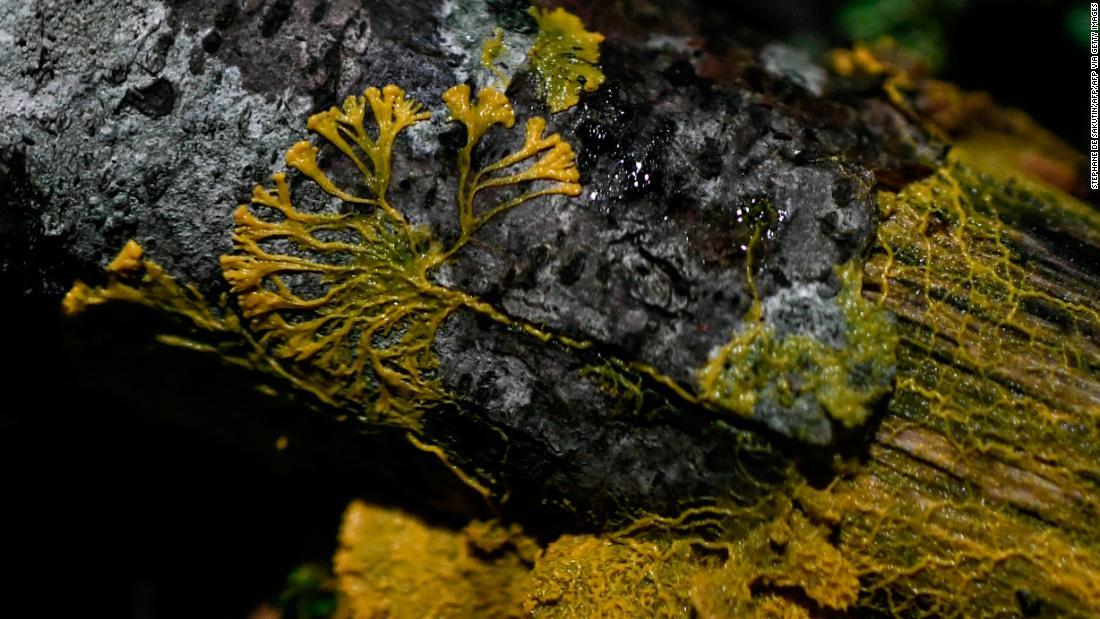 Treffen der 'blob,' weder pflanze, Tier noch Pilz