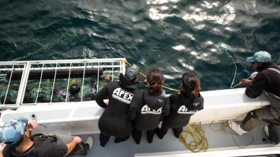 Tourists prepare to cage dive off of Seal Island. It was one of the world's best places to spot great whites, but now the tourists look at sevengill and other species.