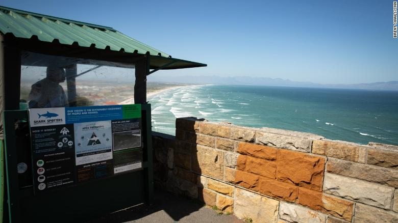 On the cliffs above shark spotters no longer take great white sightings for granted.
