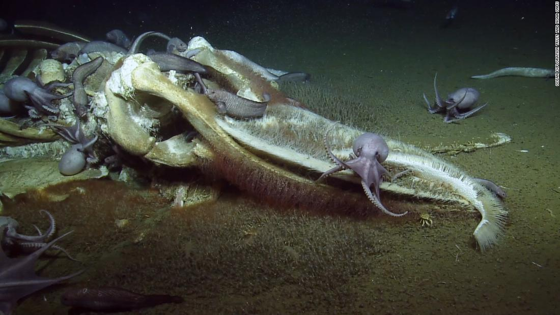 Scientists freak out over deep sea feast