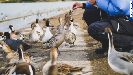 Feed The Ducks Sign Sparks Online Debate Cnn