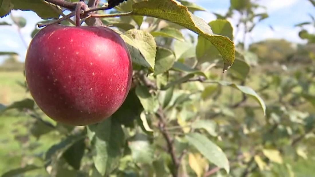 Thieves steal thousands of pounds of apples from orchard