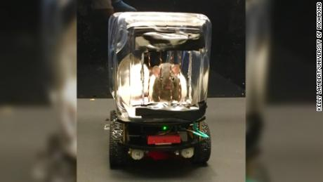 Scientists taught rats to drive little rat-sized cars. It could advance human mental health treatment