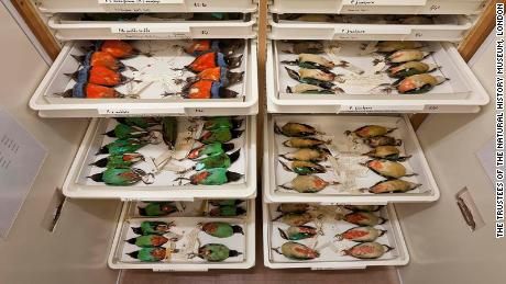 Researchers find sex bias in the natural history collections of museums around the world