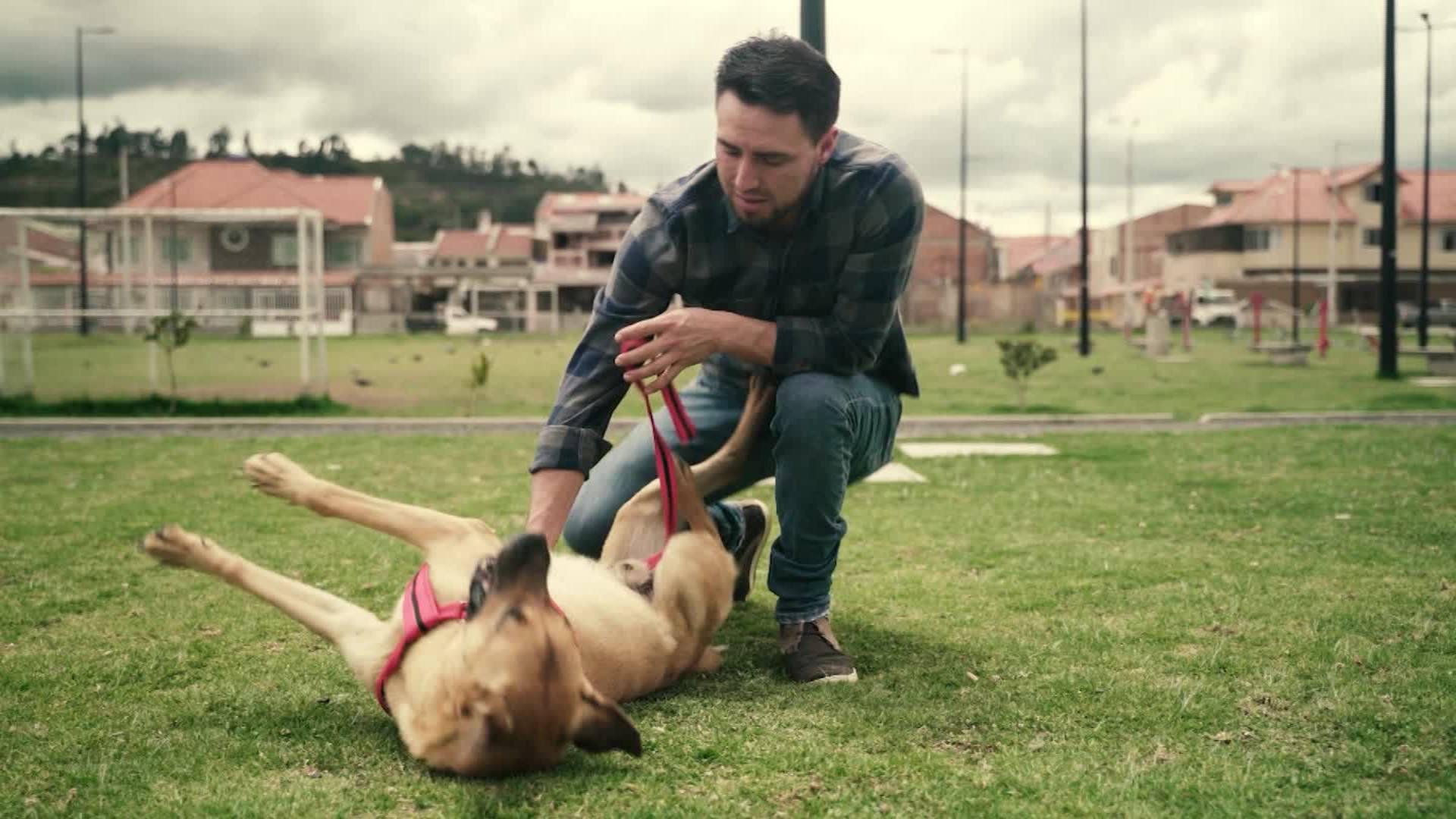 Firulais El Perro Protagonista De Las Protestas En Ecuador Cnn Video