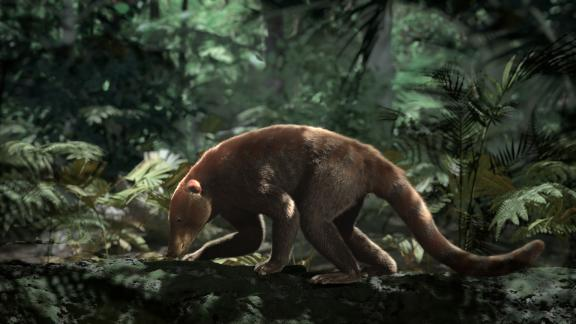 About 200,000 years after the extinction event, mammals like Loxolophus could find food in forests dominated by palm trees.