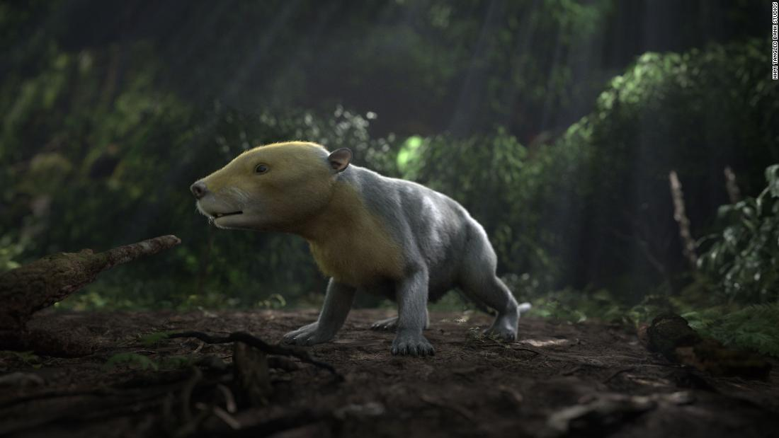 "This is a CGI rendering of the ancient Taeniolabis mammal. The rendering was taken from the PBS NOVA special ""Rise of the Mammals."""