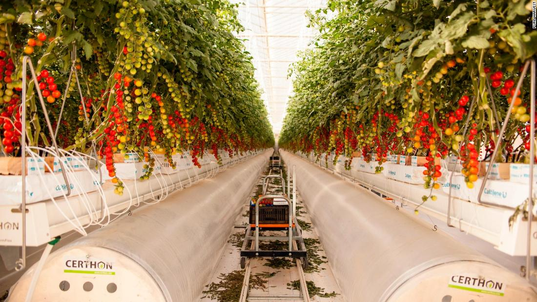 Another UAE startup, Pure Harvest, uses high-tech smart greenhouses that maintain a controlled climate and optimal conditions for growing crops year-round.
