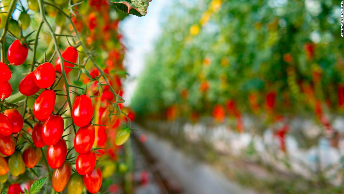 The company established a proof-of-concept facility in the Abu Dhabi desert last year and produced several varieties of tomatoes.