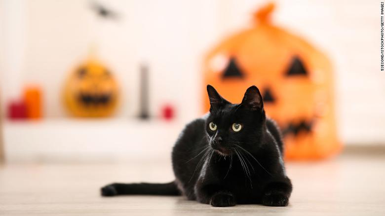Black cats are adopted less than other cats due to the superstition surrounding the felines.