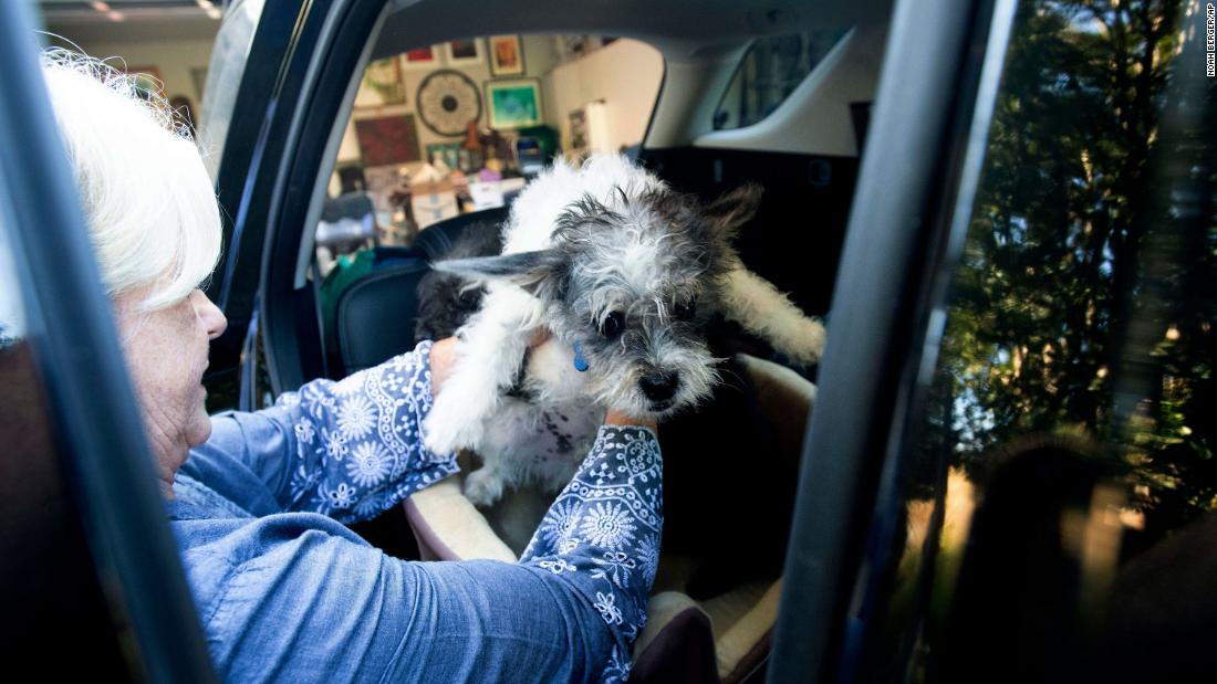 Sandy Beddow evacuates Healdsburg with her dog.